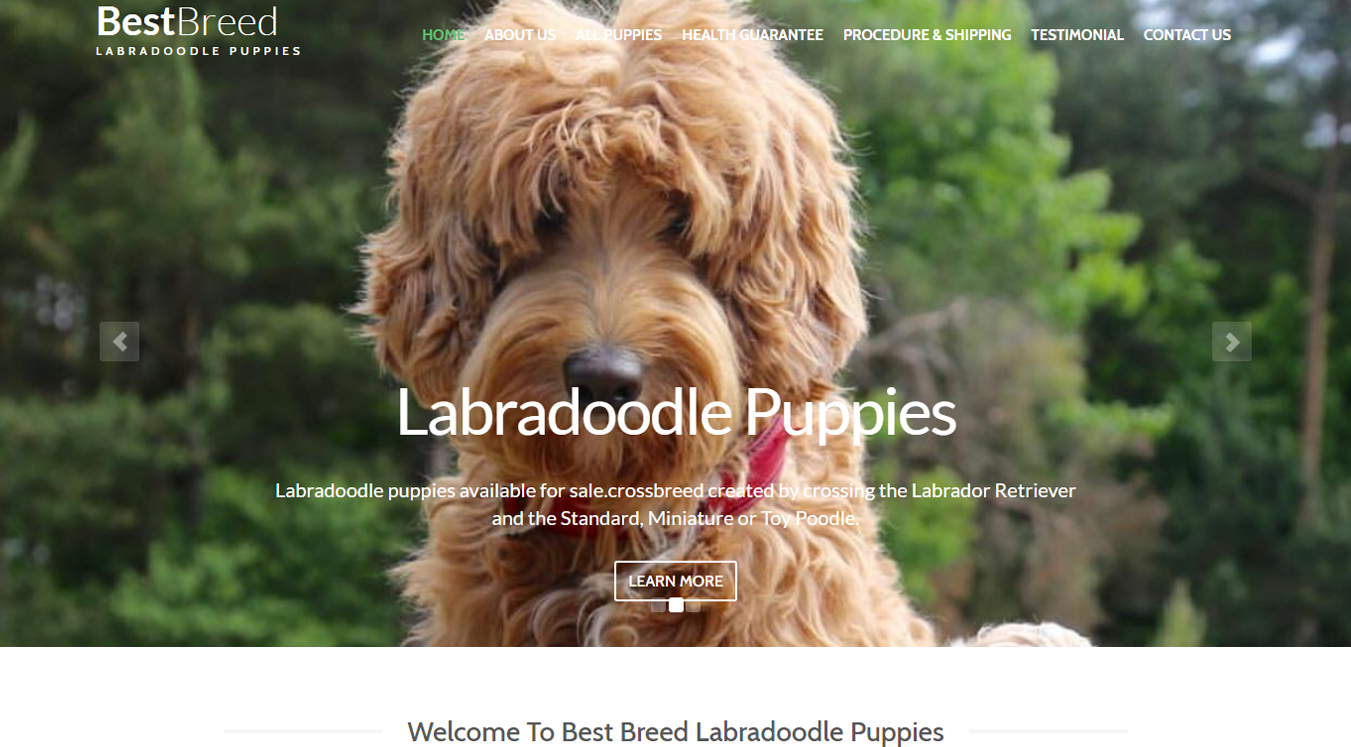 Best Breed Labradoodle Puppies